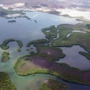 Dugno bestuburių ir bakterijų asociacijų įtakos azoto virsmams tyrimai drieksis nuo tropikų iki poliarinio rato